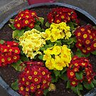 Red and yellow by AmandaWitt
