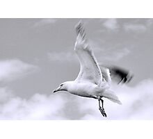 Gull in flight... Dorset UK Photographic Print