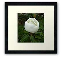 Almost Open - Naturally Inspirational Framed Print