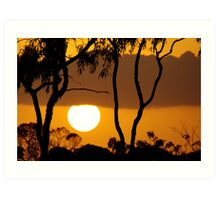 gumtree sunset, north queensland  Art Print
