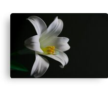 Plastic Flower Canvas Print