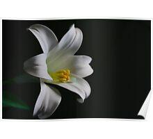 Plastic Flower Poster