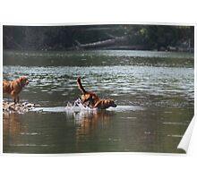 Sheer Joy  River Play -10 Poster