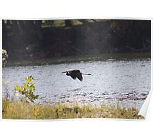 Blue Heron In Flight Potomac River Dargan's Bend- 10 Poster