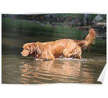 Penny All Alert Exploring The Potomac River- 10 Poster