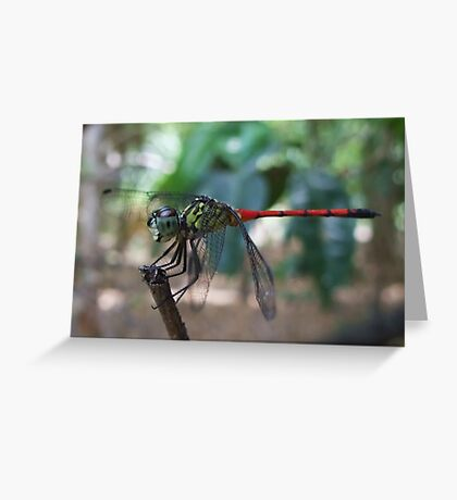 Balancing Act - Dragon Fly, Kakadu, Northern Territory Greeting Card