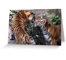 Tigers Greeting Card