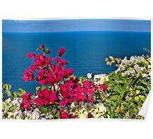 Flowers in Santorini Poster