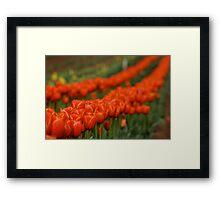 T for Tulips Framed Print