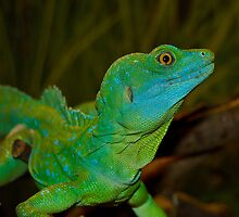Mr. Lizard - Plumed Basilisk Lizard by imagetj