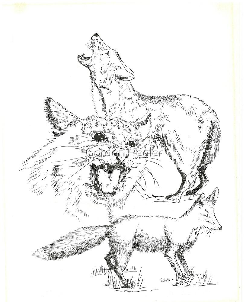 Fox Bobcat and Coyote - Pen & Ink by Gordon Pegler