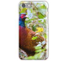 Pheasant (Phasianus Colchicus) iPhone Case/Skin