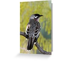 Young Adult Red Wattlebird Greeting Card