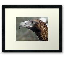 Portrait of The Australian Wedge Tailed Eagle Framed Print