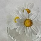 Daisies in a glass jar by inkedsandra