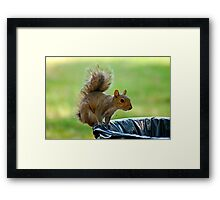 The Garbage Thief Framed Print