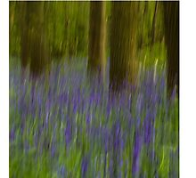 Abstract Bluebell Woods Photographic Print