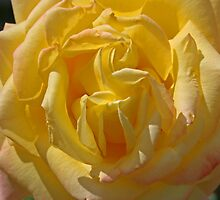 Rose of Remembrance by RedHillDigital