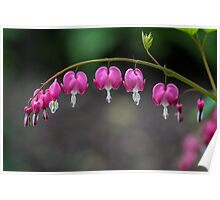 Bleeding Heart Flowers Poster