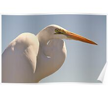 Great White Egret Up Close Poster