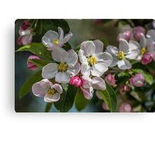 Branch of Blossom Flowers Canvas Print