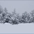 Winter forest. I by Bluesrose
