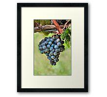 Peel Me A Grape Framed Print