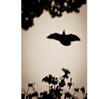 OnePhotoPerDay Series: 267 by L. Photographic Print