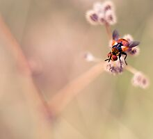 United Colours of Fly by tchebytchev