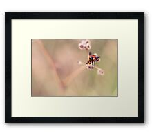 United Colours of Fly Framed Print