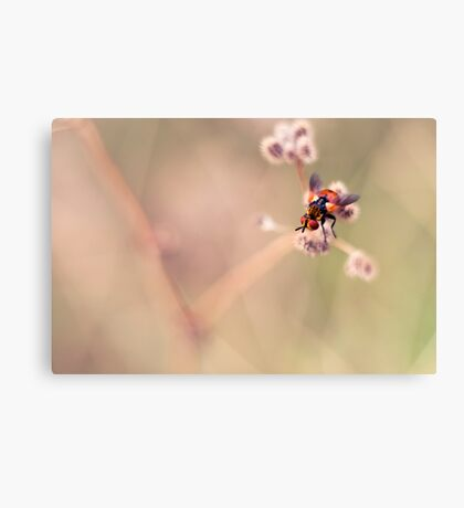 United Colours of Fly Canvas Print