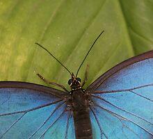 Blue on green. by froglet