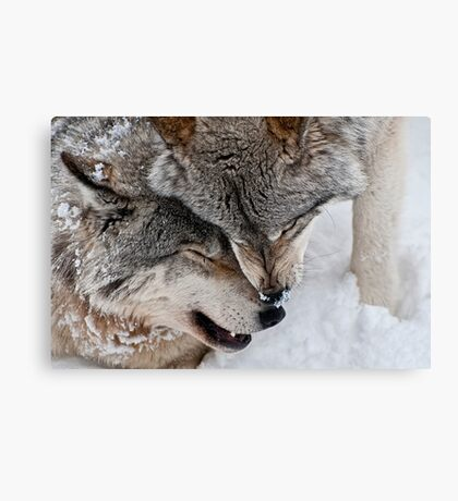 Special Moment Canvas Print