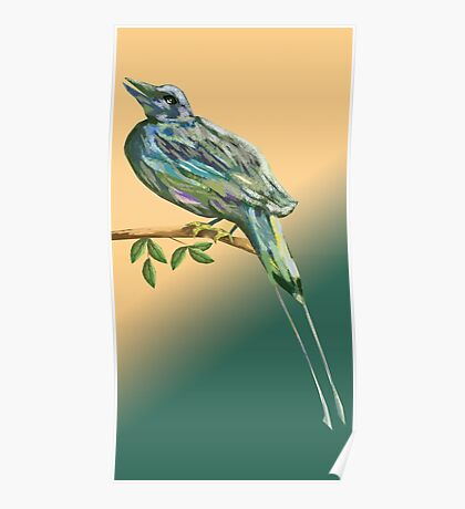 Long tailed blue bird Poster