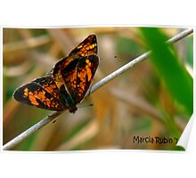 Silvery Checkerspot Poster