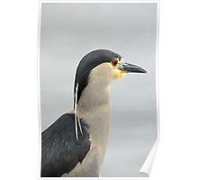 Heron Falklands Poster