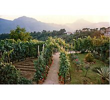 In an Italian country Garden. Photographic Print
