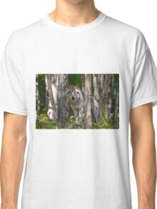 Timber wolf in Forest Classic T-Shirt
