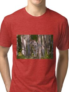 Timber wolf in Forest Tri-blend T-Shirt