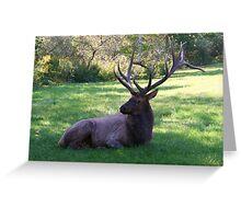 Really Big Bull Elk Greeting Card