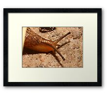 Fine Young Cannibal Framed Print