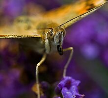 The beautiul orange butterfly by Sizzo-grafy