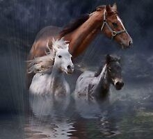 The Storm Riders by Dianna Tilley