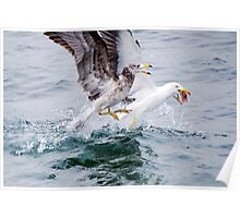 Winner takes all - Pacific Gulls Poster
