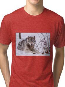 Timberwolf in Winter Tri-blend T-Shirt