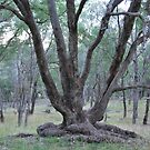 Tree by Julie Sherlock