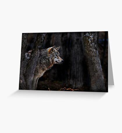 Timberwolf   Greeting Card