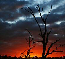 Parched Sunset by Paula McManus