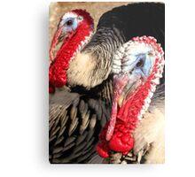 Narragansett Turkeys Metal Print