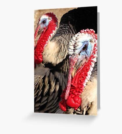 Narragansett Turkeys Greeting Card